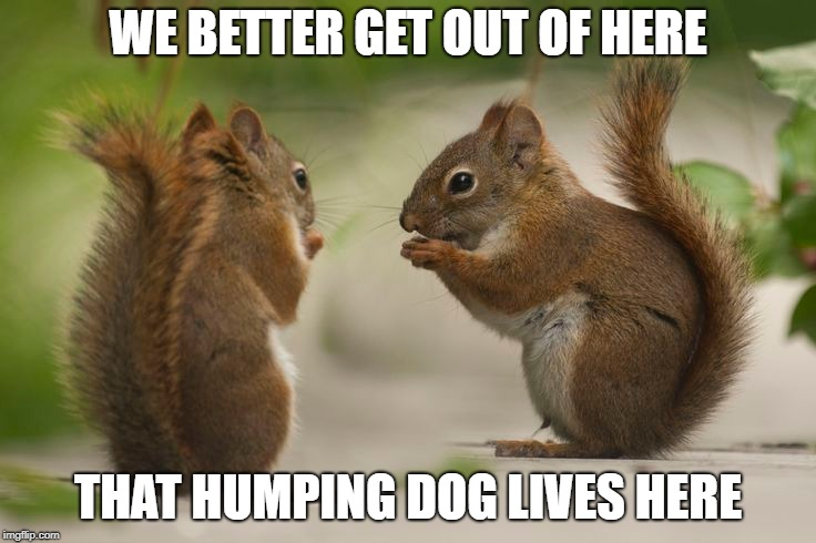 WE BETTER GET OUT OF HERE THAT HUMPING DOG LIVES HERE | made w/ Imgflip meme maker
