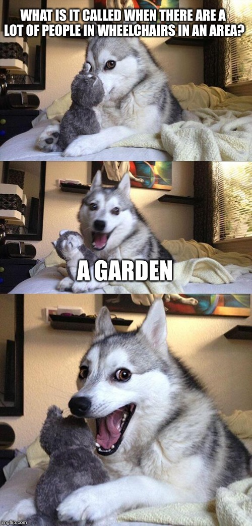 Because people in wheelchairs are called Vegetables? | WHAT IS IT CALLED WHEN THERE ARE A LOT OF PEOPLE IN WHEELCHAIRS IN AN AREA? A GARDEN | image tagged in memes,bad pun dog | made w/ Imgflip meme maker