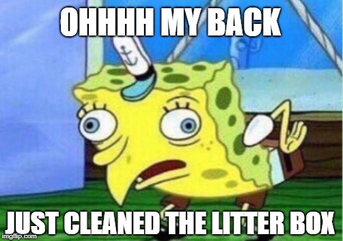Mocking Spongebob Meme | OHHHH MY BACK JUST CLEANED THE LITTER BOX | image tagged in memes,mocking spongebob | made w/ Imgflip meme maker