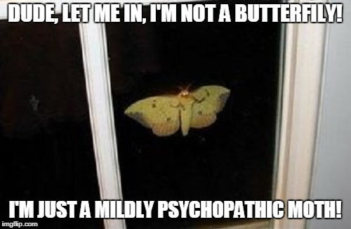 DUDE, LET ME IN, I'M NOT A BUTTERFILY! I'M JUST A MILDLY PSYCHOPATHIC MOTH! | made w/ Imgflip meme maker