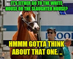 Horses Honor  | IT'S EITHER GO TO THE WHITE HOUSE OR THE SLAUGHTER HOUSE? HMMM GOTTA THINK ABOUT THAT ONE. .. | image tagged in justify no go white house,donald trump | made w/ Imgflip meme maker