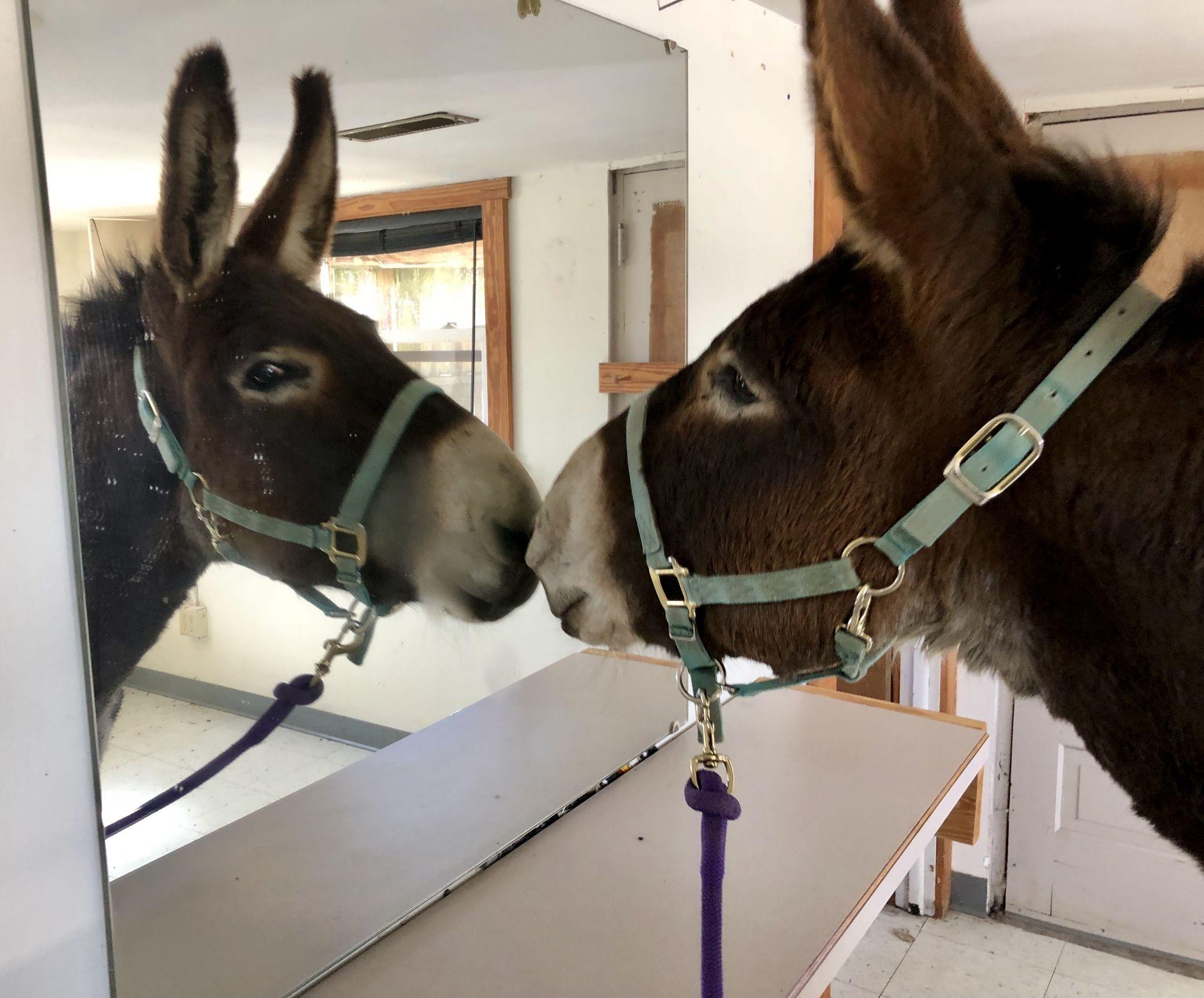 Gorgeous! (Dozer the Donkey) Blank Template - Imgflip