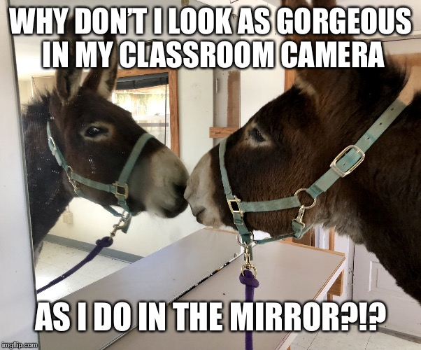 Gorgeous! (Dozer the Donkey) | WHY DON'T I LOOK AS GORGEOUS IN MY CLASSROOM CAMERA AS I DO IN THE MIRROR?!? | image tagged in gorgeous dozer the donkey | made w/ Imgflip meme maker