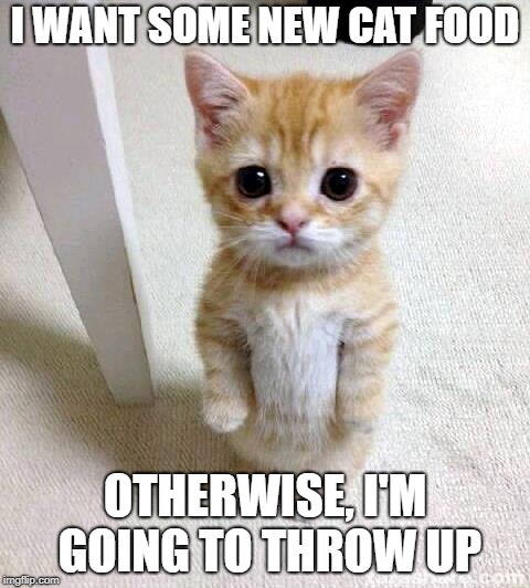 New Cat Food Now! | I WANT SOME NEW CAT FOOD OTHERWISE, I'M GOING TO THROW UP | image tagged in memes,cute cat | made w/ Imgflip meme maker