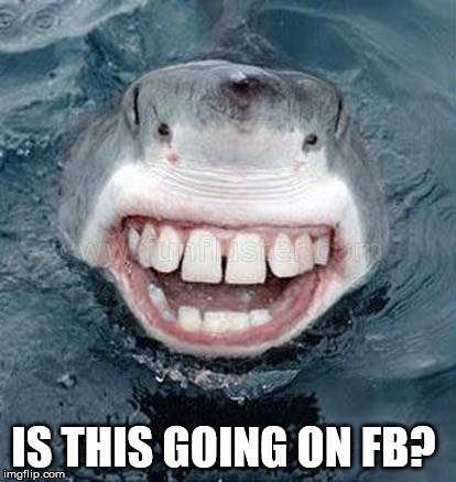 Selfie shark | IS THIS GOING ON FB? | image tagged in selfie,selfies,shark,shark week | made w/ Imgflip meme maker
