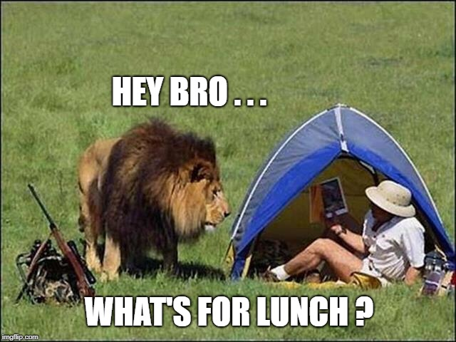 HEY BRO . . . WHAT'S FOR LUNCH ? | image tagged in lion,lunch,lunch time,it's a trap,bro,lionel richie | made w/ Imgflip meme maker