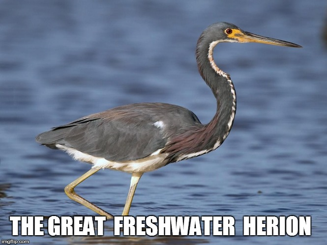 THE GREAT  FRESHWATER  HERION | made w/ Imgflip meme maker