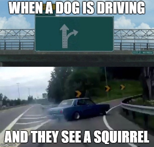 Left Exit 12 Off Ramp Meme | WHEN A DOG IS DRIVING AND THEY SEE A SQUIRREL | image tagged in memes,left exit 12 off ramp | made w/ Imgflip meme maker