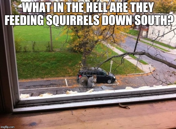 Squirrels | WHAT IN THE HELL ARE THEY FEEDING SQUIRRELS DOWN SOUTH? | image tagged in giant squirrels,funny squirrels | made w/ Imgflip meme maker