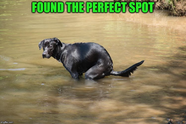FOUND THE PERFECT SPOT | made w/ Imgflip meme maker