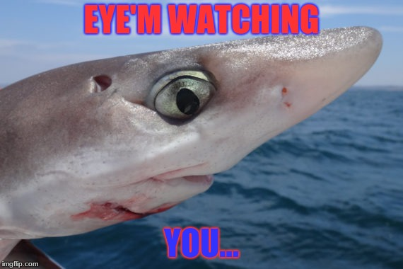 EYE'M WATCHING YOU... | image tagged in dogfish shark | made w/ Imgflip meme maker
