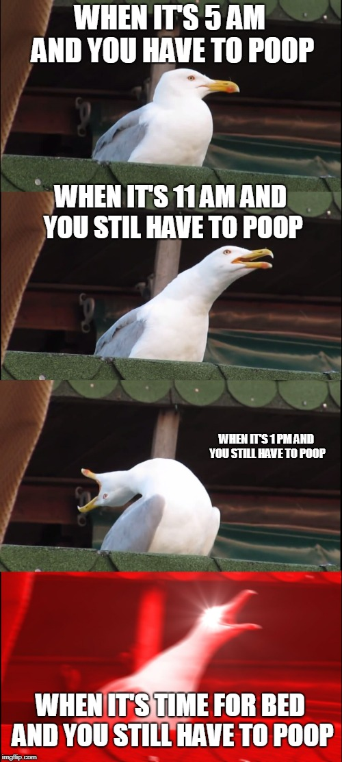 Inhaling Seagull Meme | WHEN IT'S 5 AM AND YOU HAVE TO POOP WHEN IT'S 11 AM AND YOU STIL HAVE TO POOP WHEN IT'S 1 PM AND YOU STILL HAVE TO POOP WHEN IT'S TIME FOR B | image tagged in memes,inhaling seagull | made w/ Imgflip meme maker
