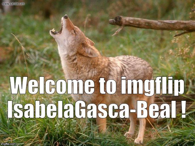 coyote howls | Welcome to imgflip IsabelaGasca-Beal ! | image tagged in coyote howls | made w/ Imgflip meme maker
