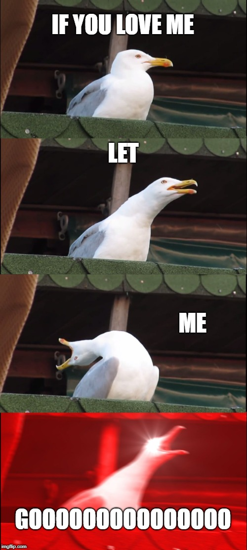 And there go my eardrums! | IF YOU LOVE ME LET ME GOOOOOOOOOOOOOOO | image tagged in memes,inhaling seagull,panic at the disco,singing | made w/ Imgflip meme maker