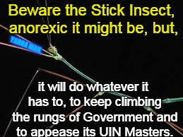 Beware the Stick Insect, anorexic it might be, but, it will do whatever it has to, to keep climbing the rungs of Government and to appease i | image tagged in julie bishop stick insect | made w/ Imgflip meme maker