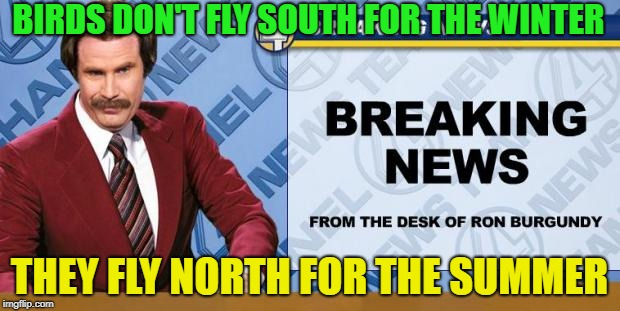 Science news........ | BIRDS DON'T FLY SOUTH FOR THE WINTER THEY FLY NORTH FOR THE SUMMER | image tagged in breaking news,memes,funny,science | made w/ Imgflip meme maker