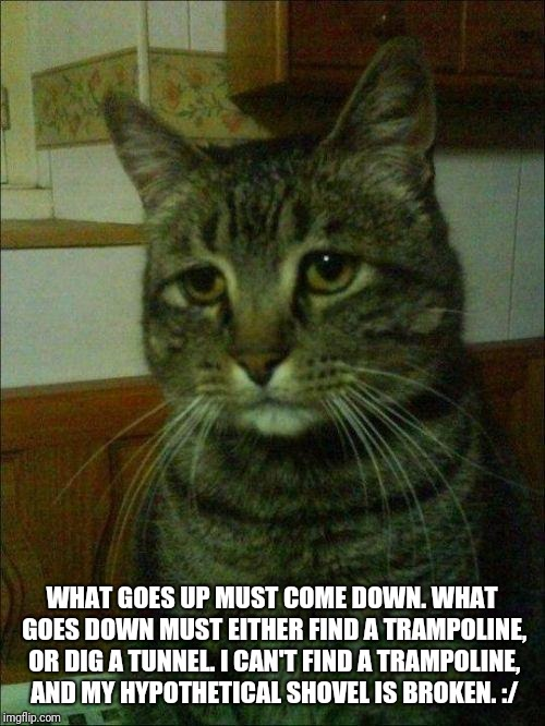 depressed cat | WHAT GOES UP MUST COME DOWN. WHAT GOES DOWN MUST EITHER FIND A TRAMPOLINE, OR DIG A TUNNEL. I CAN'T FIND A TRAMPOLINE, AND MY HYPOTHETICAL S | image tagged in depressed cat | made w/ Imgflip meme maker