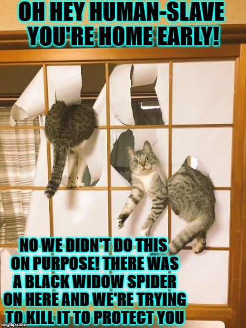OH HEY HUMAN-SLAVE YOU'RE HOME EARLY! NO WE DIDN'T DO THIS ON PURPOSE! THERE WAS A BLACK WIDOW SPIDER ON HERE AND WE'RE TRYING TO KILL IT TO | image tagged in cats r jerks | made w/ Imgflip meme maker