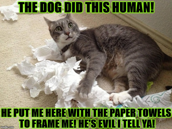 THE DOG DID THIS HUMAN! HE PUT ME HERE WITH THE PAPER TOWELS TO FRAME ME! HE'S EVIL I TELL YA! | image tagged in framed | made w/ Imgflip meme maker