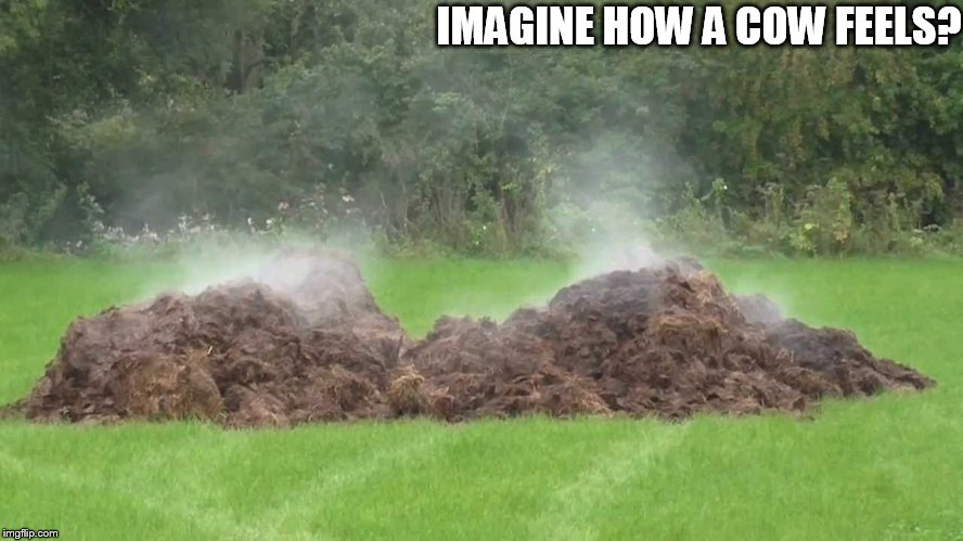 IMAGINE HOW A COW FEELS? | made w/ Imgflip meme maker
