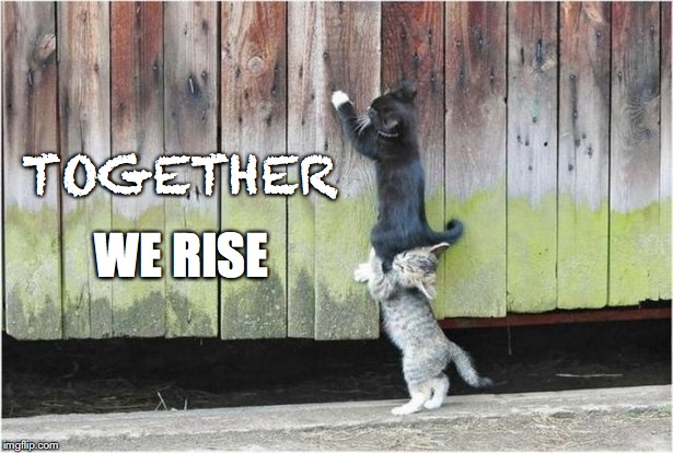 Together We Rise | TOGETHER WE RISE | image tagged in teamwork,togetherwerise,animals,cutekittens,team,motivate | made w/ Imgflip meme maker