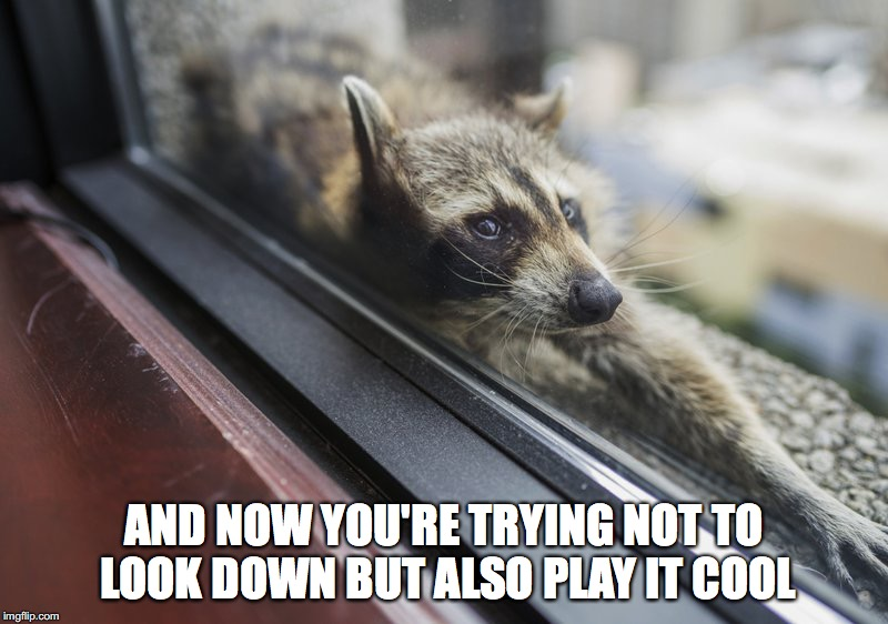 Playing it cool racoon | AND NOW YOU'RE TRYING NOT TO LOOK DOWN BUT ALSO PLAY IT COOL | image tagged in racoon | made w/ Imgflip meme maker