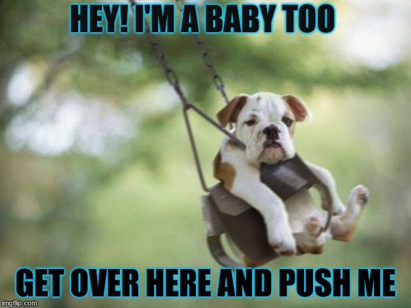 Babies come in all shapes and sizes, even fat bulldogs! | HEY! I'M A BABY TOO GET OVER HERE AND PUSH ME | image tagged in funny dogs | made w/ Imgflip meme maker