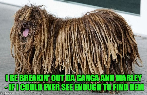 I BE BREAKIN' OUT DA GANGA AND MARLEY - IF I COULD EVER SEE ENOUGH TO FIND DEM | made w/ Imgflip meme maker