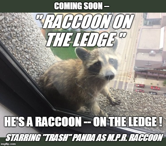 "COMING SOON -- STARRING ""TRASH"" PANDA AS M.P.R. RACCOON "" RACCOON ON THE LEDGE "" HE'S A RACCOON -- ON THE LEDGE ! 