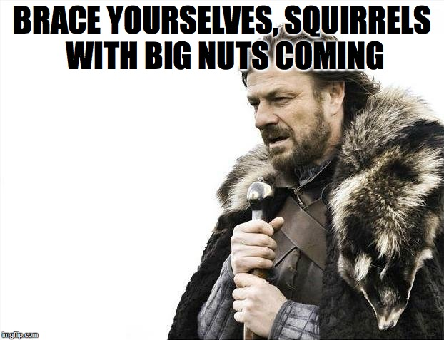 Brace Yourselves X is Coming Meme | BRACE YOURSELVES, SQUIRRELS WITH BIG NUTS COMING | image tagged in memes,brace yourselves x is coming | made w/ Imgflip meme maker
