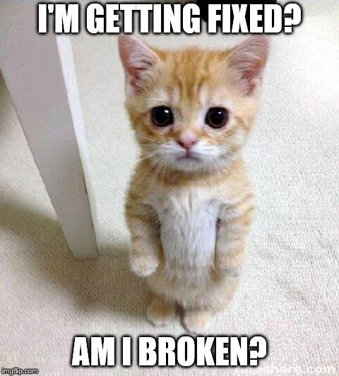 Cute Cat Meme | I'M GETTING FIXED? AM I BROKEN? | image tagged in memes,cute cat | made w/ Imgflip meme maker