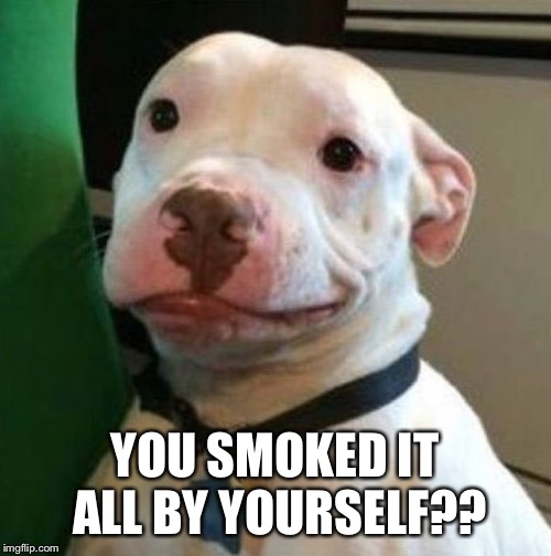 Awkward Dog | YOU SMOKED IT ALL BY YOURSELF?? | image tagged in awkward dog | made w/ Imgflip meme maker