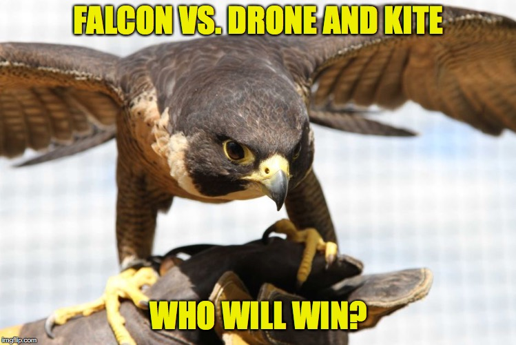 FALCON VS. DRONE AND KITE WHO WILL WIN? | made w/ Imgflip meme maker