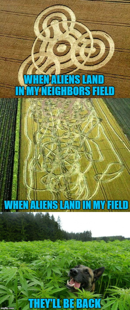 Aliens Week. 6/12 - 6/19, an Aliens and clinkster event | WHEN ALIENS LAND IN MY NEIGHBORS FIELD WHEN ALIENS LAND IN MY FIELD THEY'LL BE BACK | image tagged in crop circles,memes,aliens,funny,alien week,marijuana | made w/ Imgflip meme maker