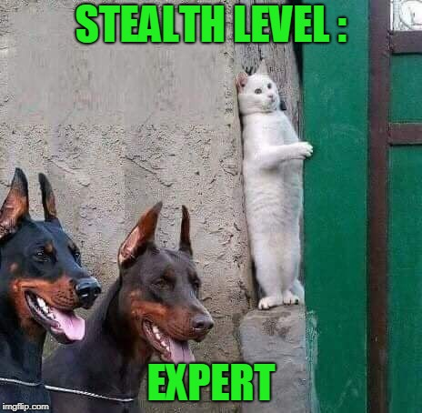 Realease The Hounds | STEALTH LEVEL : EXPERT | image tagged in cat dobermans undetectable expert funny meme | made w/ Imgflip meme maker