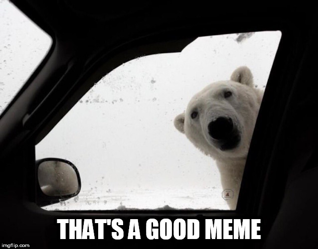 polar bear at car window | THAT'S A GOOD MEME | image tagged in polar bear at car window | made w/ Imgflip meme maker