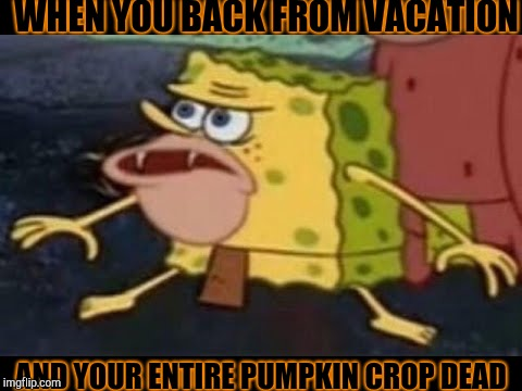 When Your Pumpkins Dead | WHEN YOU BACK FROM VACATION AND YOUR ENTIRE PUMPKIN CROP DEAD | image tagged in spongegar,dead pumpkins,omg | made w/ Imgflip meme maker