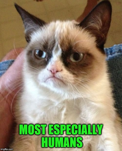Grumpy Cat Meme | MOST ESPECIALLY HUMANS | image tagged in memes,grumpy cat | made w/ Imgflip meme maker