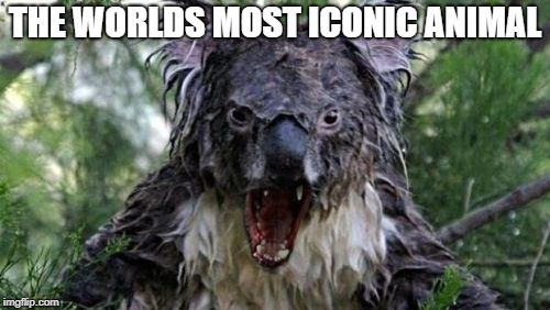 Angry Koala | THE WORLDS MOST ICONIC ANIMAL | image tagged in memes,angry koala | made w/ Imgflip meme maker