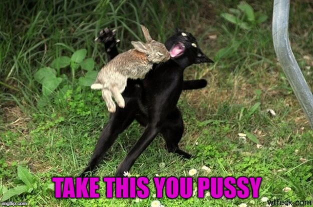 TAKE THIS YOU PUSSY | made w/ Imgflip meme maker