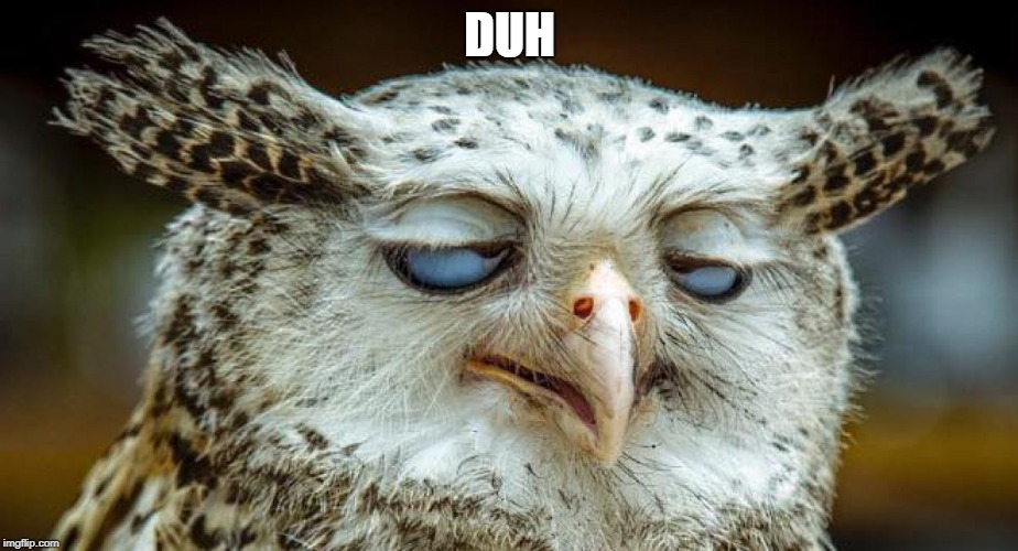 relaxed owl | DUH | image tagged in relaxed owl | made w/ Imgflip meme maker