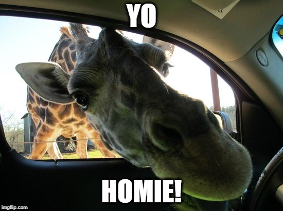 YO HOMIE! | made w/ Imgflip meme maker