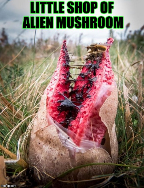LITTLE SHOP OF ALIEN MUSHROOM | made w/ Imgflip meme maker
