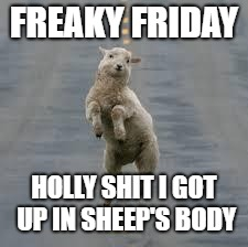 dancing sheep | FREAKY FRIDAY HOLLY SHIT I GOT UP IN SHEEP'S BODY | image tagged in dancing sheep | made w/ Imgflip meme maker