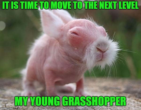 IT IS TIME TO MOVE TO THE NEXT LEVEL MY YOUNG GRASSHOPPER | made w/ Imgflip meme maker