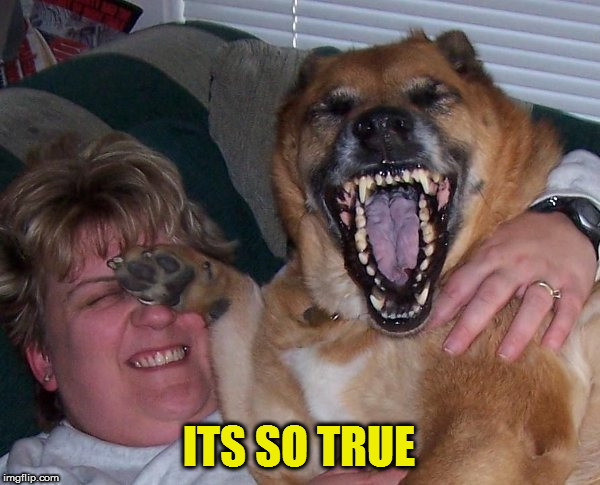 laughing dog | ITS SO TRUE | image tagged in laughing dog | made w/ Imgflip meme maker