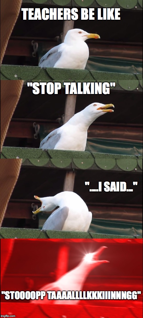 "Inhaling Seagull Meme | TEACHERS BE LIKE ""STOP TALKING"" ""....I SAID..."" ""STOOOOPP TAAAALLLLKKKIIINNNGG"" 