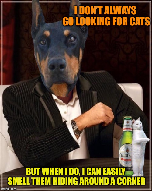 I DON'T ALWAYS GO LOOKING FOR CATS BUT WHEN I DO, I CAN EASILY SMELL THEM HIDING AROUND A CORNER | made w/ Imgflip meme maker