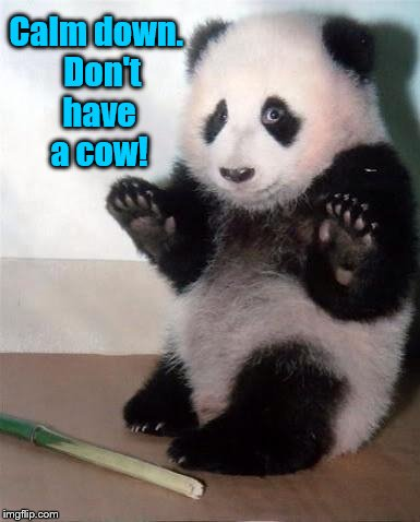 Calming Panda Bear | Calm down.  Don't have a cow! | image tagged in hands up panda,calm down,relax,funny memes,memes,don't have a cow | made w/ Imgflip meme maker