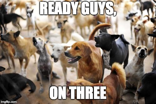 READY GUYS, ON THREE | image tagged in memes,dogs,barking | made w/ Imgflip meme maker